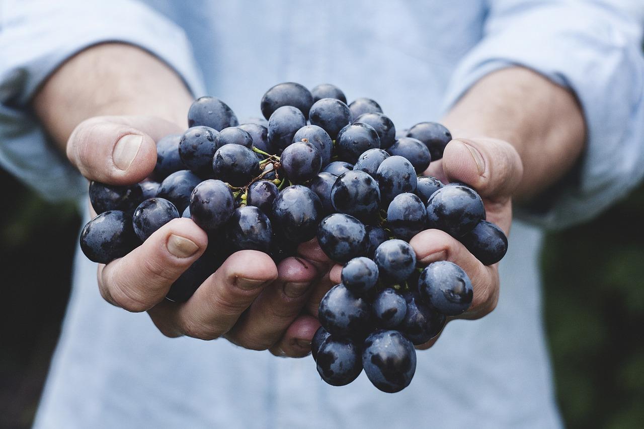 a man holding fresh grapes